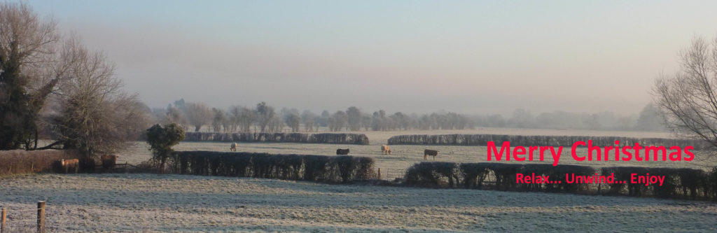 Cattle enjoying the lovely frosty morning