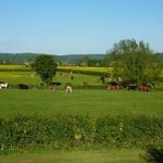 View of the meadows around Sink Green Farm Hereford2