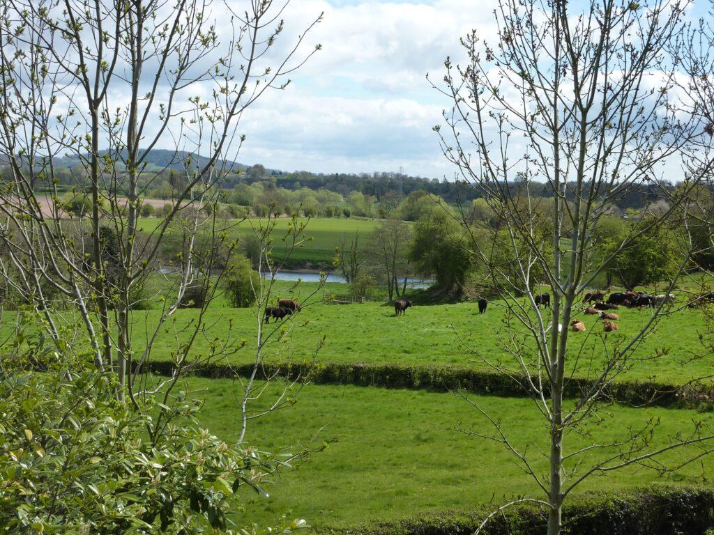Riverside Walks in Herefordshire