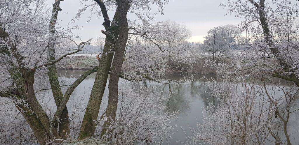 Frasty morning along the river bank @ Sink Green Farm