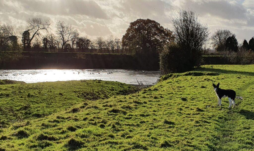 Riverside walk with Seb