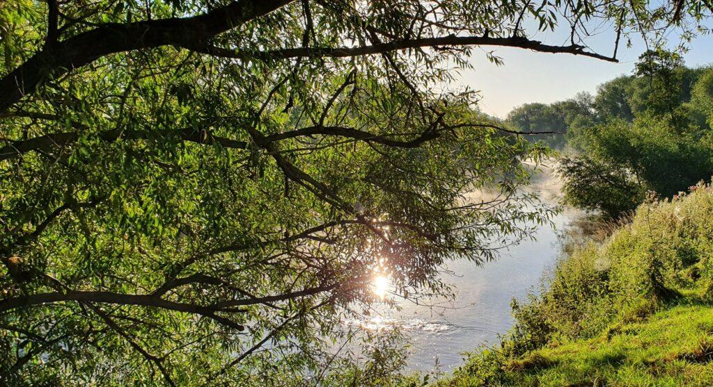 Sunny walk along the riverbank