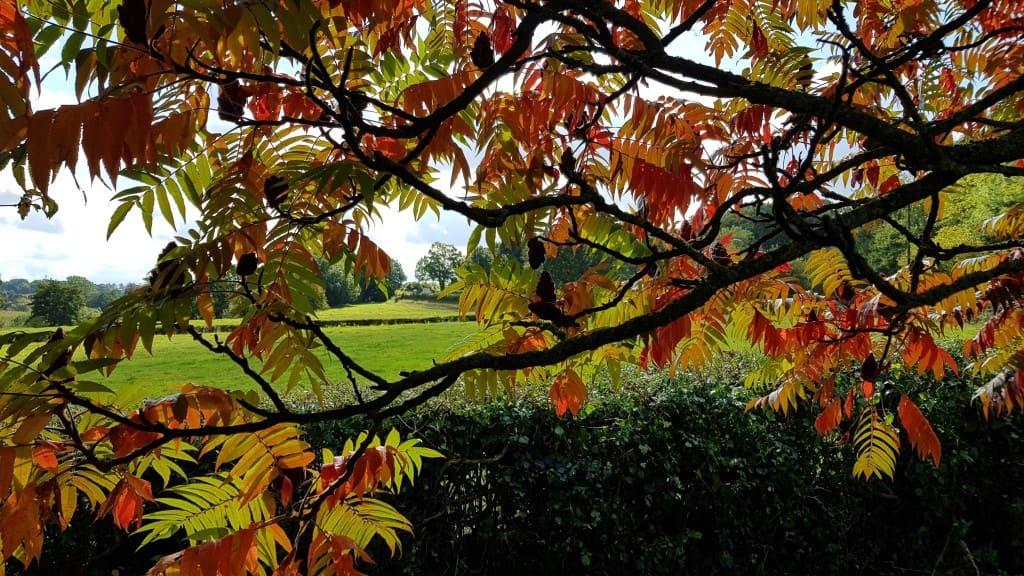 Autumn 2107