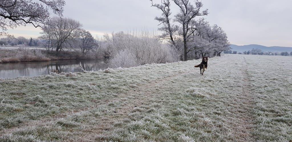 Both Rigel & the Cattle enjoying a sunny frosty morning.
