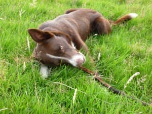 Rigel with his stick
