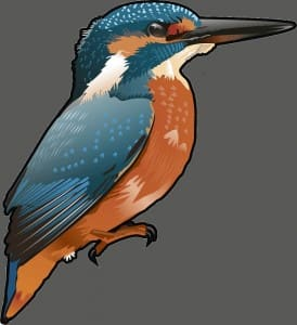 kingfisher as a jpeg for our web resized